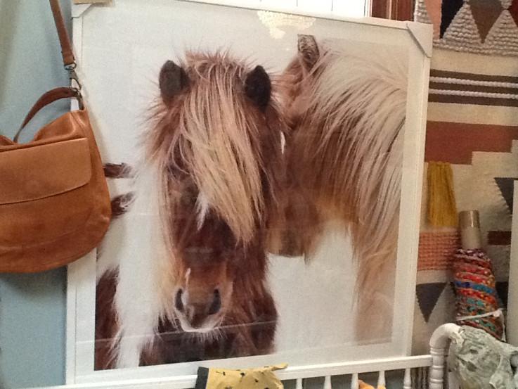 Winter Foal Wall Print