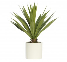 AGAVE IN LARGE WHITE CYLINDER PLANTER