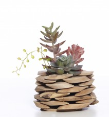 SUCCULENTS IN TIMBER STACKED PLANTER