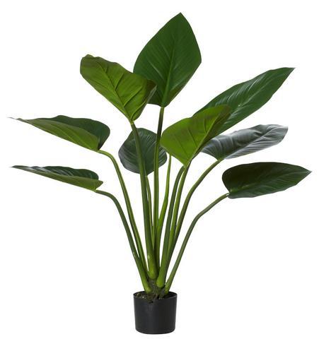 Green Kingdom Plant