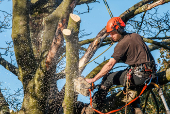 Commercial Tree Removal Expert Ipswich