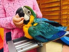 Macaw Parrot available to go