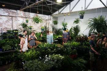 Huge Indoor Plant Warehouse S