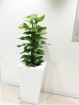 Best Indoor Plants in Melbourne | Ins