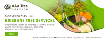 Maintain your trees with care by AAA Tree service