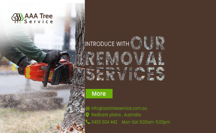 These arborists are wining peoples' trust with their quality services