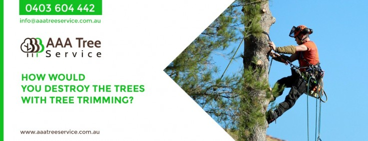 Take the best care for trees with AAA Tree Service