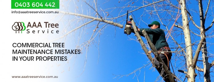 Say no to over pruning and hire the experts from AAA Tree Service