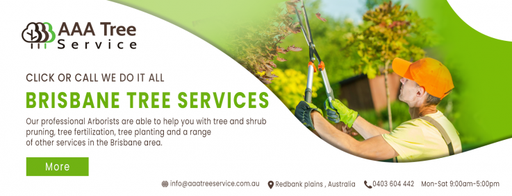Get the best care for your trees with AAA Tree Service