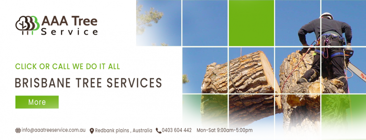 The best tree Removal Company in Australia