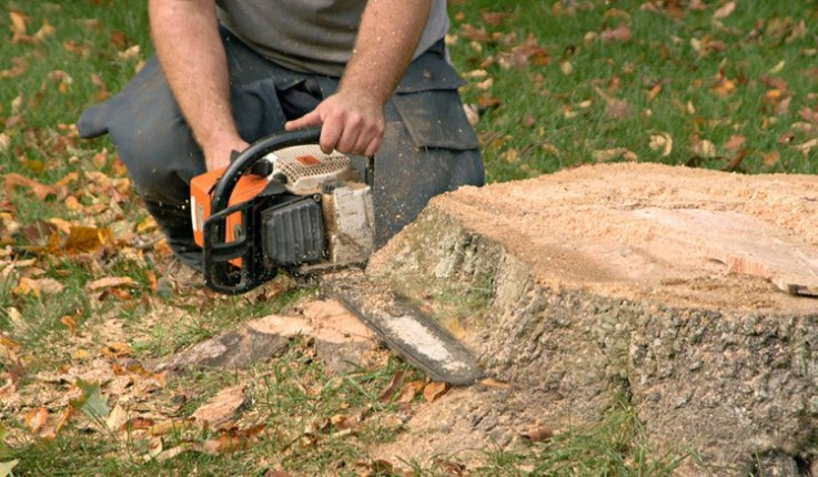 Quality Tree Stump and Root Removal Specialists in Brighton - Stump Removal Malvern
