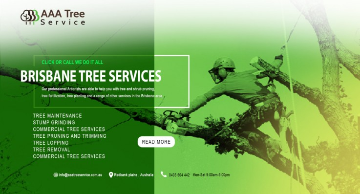 The best way of maintaining your trees are at AAA Tree Service