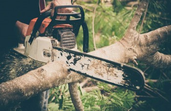 Tree Removal Services Adelaide| Owned an