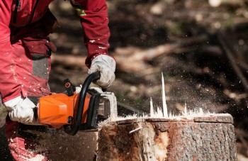 Stumps Removal Adelaide| Tree Removal Se