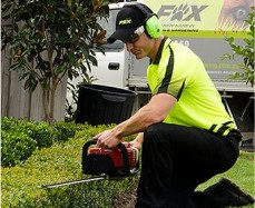 Hedging Services Taree