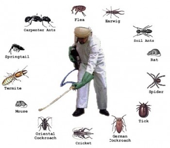 Pest Control Forster