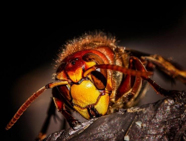 Pest Control Lis ...