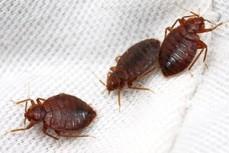 Pest Control Albany