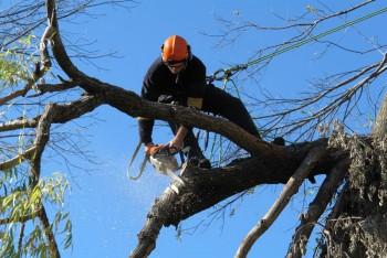 Tree Cutting Service in Sunshine