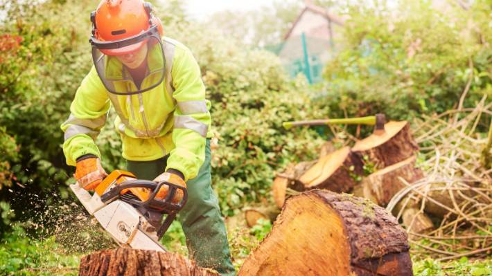 Looking for cheap stump and root removal in Mulgrave?
