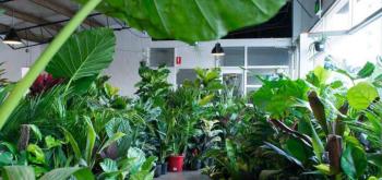 Top Plant Nursery in Australia