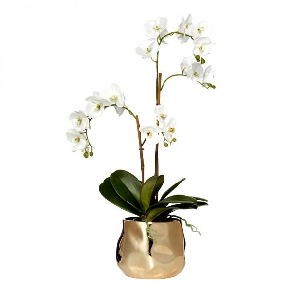 Phalaenopsis Luxe Pot Lge White/Bronze