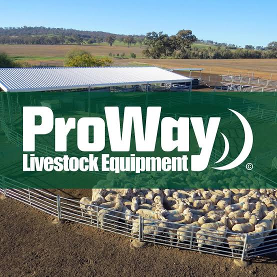 Cattle Race Design from ProWay