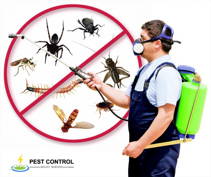 Pest Control Mount Barker | Pest Control Services