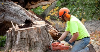 Get Tree removal Services in Gosford a