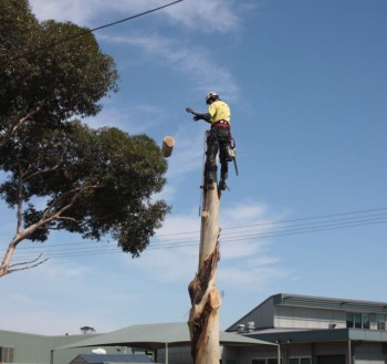 Get Cost-Effective Tree Stump Removal in Castlemaine -  A & P Tree Services