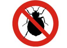 Bedbugs Control Adelaide