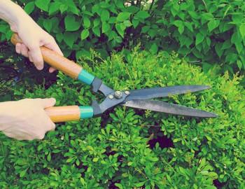Hire Landscaping Contractors in Sydney