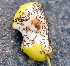 Pest Control Haw ...