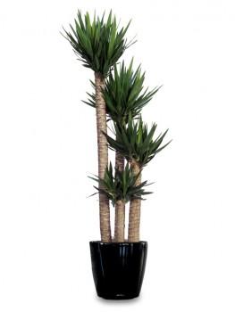 Plant Hire Melbourne-InscapeIndoorPlant