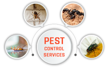 Pest Control Dover Heights