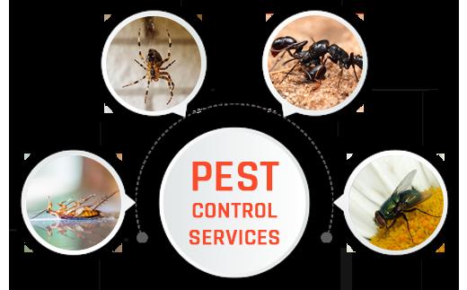 Pest Control Dov ...