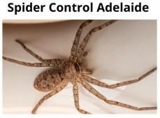 Spider Control A ...
