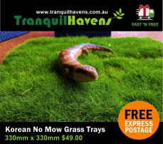 Trays of No Mow Grass (Zoysia tenuifolia