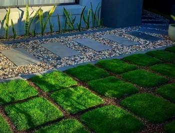 Trays of No Mow Grass (Zoysia tenuifolia