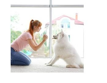 Puppy Classes Melbourne | Dog Psychologist