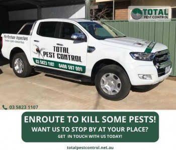 The Significance of Termite Protection Shepparton