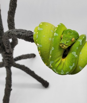 Green tree python for reptile lover