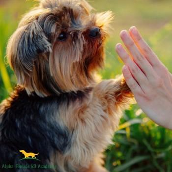 Home Dog Training Melbourne - Alpha Female K9 Academy