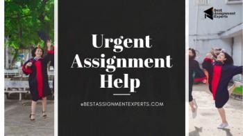 Urgent Assignment Help |Quick Assignment help