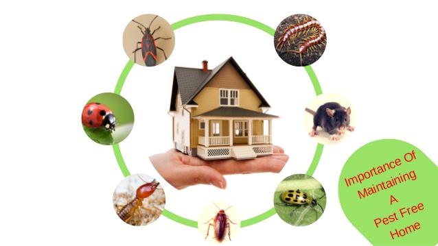 Pest Control Upwey