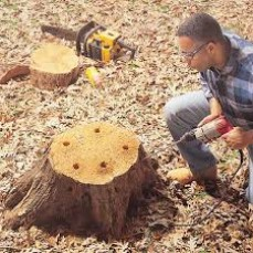 Tree Stump Remov ...