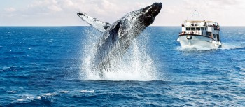 Types of Whale watching cruise in Perth