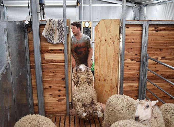 Shearing Shed De ...
