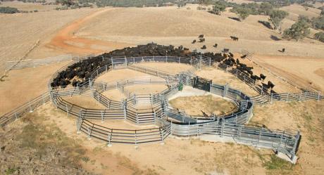 Permanent Cattle ...