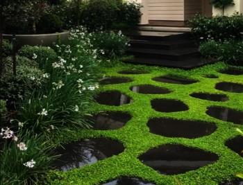 Dichondra Repens - No Mow Lawn